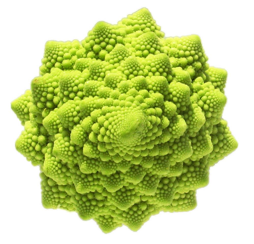 geometria fractal lookalike